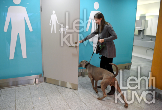 Relief for pets - a et toilet at Helsinki airport with a dog model